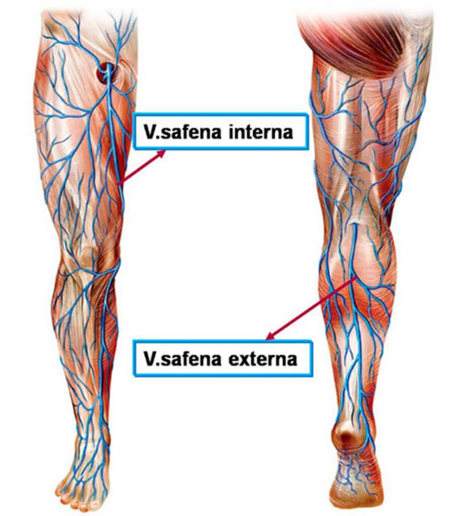 Magnífico Vena Safena Imagen - Anatomía de Las Imágenesdel Cuerpo ...